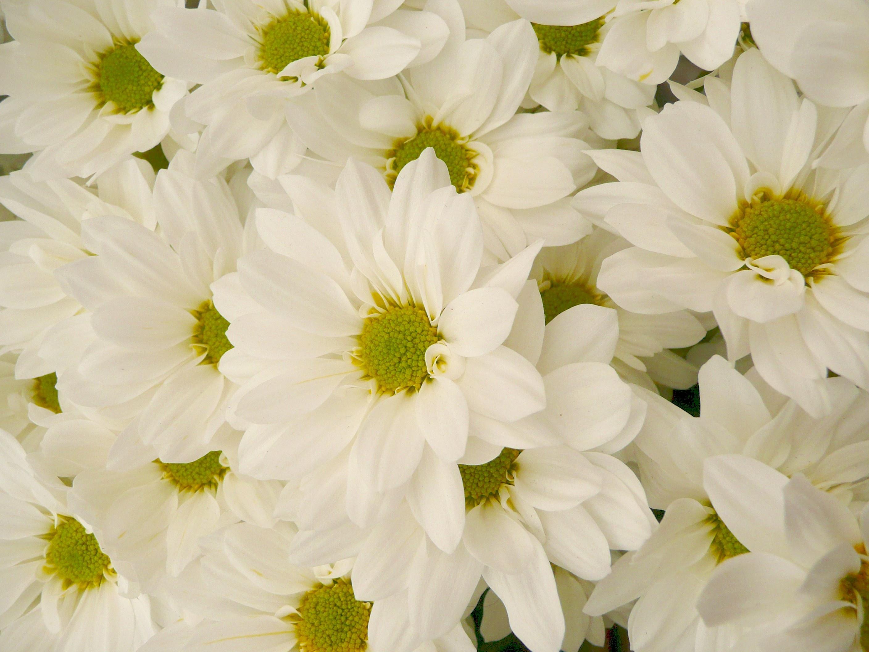 Consultez régulièrement les offres de la boutique Floralies, à Issoire !